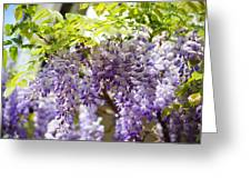 Wisteria Garden 9 Greeting Card