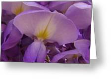 Wisteria Parasol Greeting Card