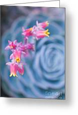 with affection - Echeveria glauca Greeting Card