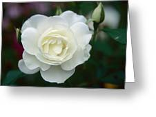 Withe Rose Greeting Card