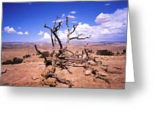 Withered Tree Paria Canyon Greeting Card