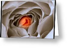 Within A Rose Greeting Card
