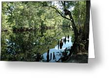 Withlacoochee River Reflections Greeting Card