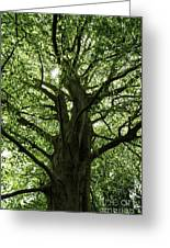 Witness Tree Greeting Card