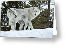 Wolf - Friend Greeting Card