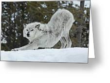 Wolf - Yoga Greeting Card