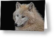 Wolf Bride Greeting Card