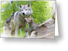 Wolf Of Minnesota Greeting Card