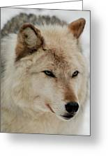 Wolf Expressions Greeting Card