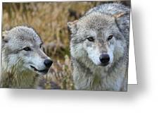 Wolf Glare Greeting Card