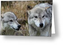 Wolf Glare II Greeting Card