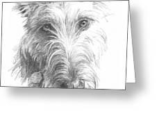 Wolf Hound Pencil Portrait Greeting Card