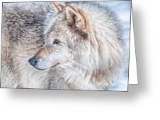 Wolf In Disguise Greeting Card