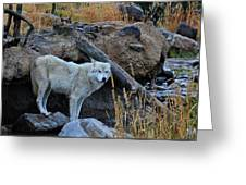 Wolf In The Wild Greeting Card
