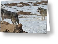 Wolf Pair Greeting Card