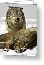 Wolf Protecting Kill Greeting Card