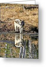 Wolf Pup Reflection Greeting Card