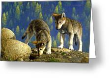Wolf Pups - Anybody Home Greeting Card by Crista Forest