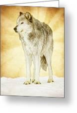 Wolf Shine Greeting Card