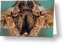 Wolf Spider 5x Greeting Card