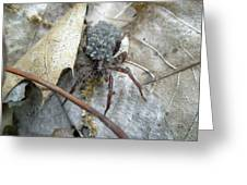 Wolf Spider And Spiderlings Greeting Card