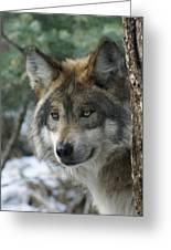 Wolf Upclose Greeting Card