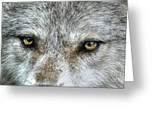Wolf Wisdom Greeting Card