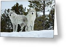 Wolves - Partners Greeting Card