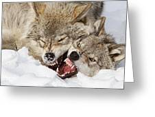 Wolves Rules Greeting Card