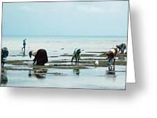 Women Of Zanzibar Greeting Card