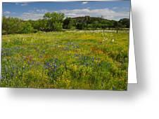 Wonder-filled Meadows Greeting Card