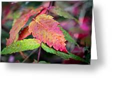 Wonder Leaf Greeting Card
