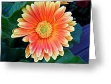 Wonderful Daisy Greeting Card