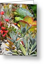 Wonderful Succulent Plants 2 Greeting Card