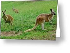 Wonderful Wallabies Greeting Card