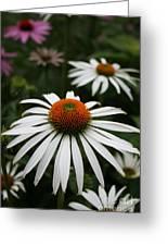Wonderful White Cone Flower Greeting Card