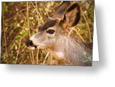 Wondering Deer Greeting Card by Kimberly Maiden