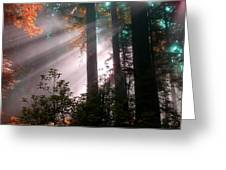 Wonderland Sunbeams Greeting Card