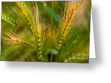 Wonderous Wild Wheat Greeting Card