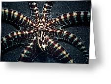 Wonderpus Octopus Greeting Card