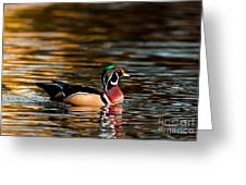 Wood Duck At Morning Greeting Card