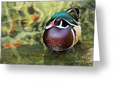 Wood Duck Be Still Greeting Card