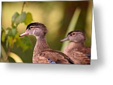 Wood Duck Close Up 1 Greeting Card
