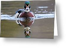 Wood Duck Drake Frontal Greeting Card