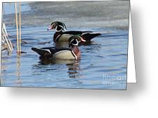 Wood Duck Drake Pair Greeting Card