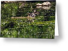 Wood Duck Family Greeting Card