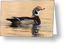 Wood Duck I Greeting Card