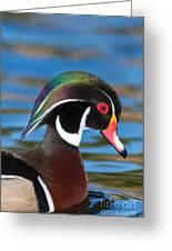 Wood Duck IIi Greeting Card