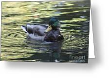 Wood Duck Greeting Card