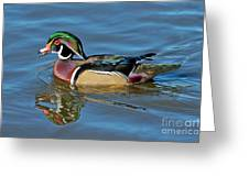 Wood Duck Male Calling Greeting Card